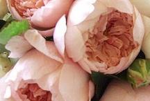 Love flowers...