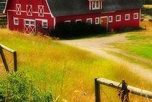 Farm Life  / by Heather Hawthorne