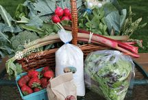 Farm Share Experiment / Participating in a Farm Share is a learning experience - this is our journey with photos, ideas and recipes!