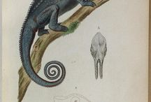 Natuurwetenschappelijke tekeningen / Leer (van) de natuur
