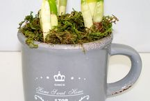 EASTER PLANTERS 2015 / EASTER PLANTERS