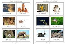 Thema: dieren