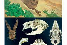 Wallography Zoological Wall Charts