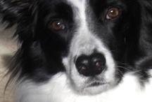 Dogs..I Love / by Cathy Hazel