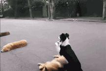 GIF  zvířata