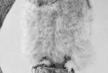 Bagoly, owl