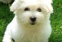 chien santo