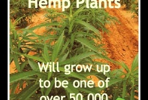 Cannabis Facts