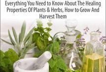 Medicals Plant Guide