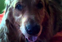 Rusty / This is Rusty's Home Page. / by Jimmy Peters