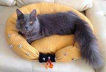 Camas para gatos - cat / Como hacer una cama para nuestroa mininos