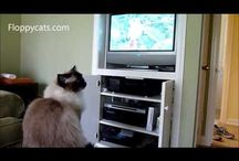 DVD for Cat