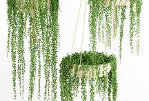 piante verdi e fiori