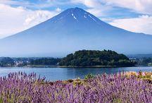 Culture : Japan / All things Japanese / by Paul Kavanagh Studio