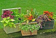 Garden/Patio Ideas