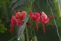 Exotic flowers / Fleurs exotiques / Sous les tropiques