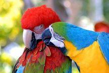 Bird of a Feather / by Sylvie Banville