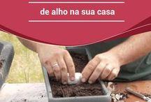 Jardinagem e cultura de ervas