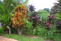 Garden Shrubs & Trees
