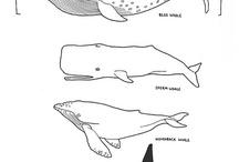 bálnák cápák krokodilok