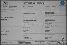 Carmielo Ephesus Black Staffordshire Bull Terrıer / Carmielo Ephesus Black Staffordshire Bull Terrier male Owners: Bosphorus Bulls Kennel, Türkiye,İstanbul Breeder: Selçuk Özfirat Türkiye,İzmir
