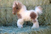 A flufy horse