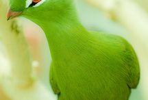 Birds / My favorites / by Carol Fraile