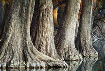 fák - trees