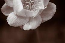 Flowers No 1 **
