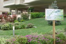 Κήπος / Συντηρήσεις Κήπων