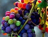 Color / by Andrea LaPorte