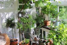 Terassenbepflanzung