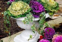 kasvit ja puutarha