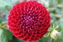 Beleza presente  na simplicidade / Sempre há motivos para oferecer flores