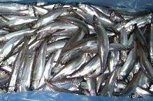 рыба мелочь