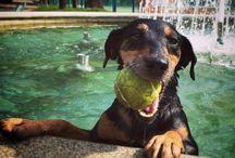 Mína / Dog,jagd terrier,love
