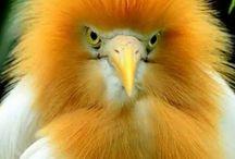 Beautifull exotic birds
