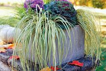 Fall In Love With Plants / All things inspirational for your Fall gardening adventures