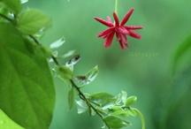 Flower by Ich Nguyen  / by Ich Nguyen
