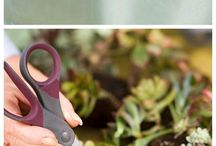 Succulentjes