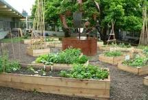 Multicultural Gardens