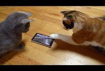 ネコ猫ネコ