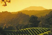 Wine Vineyards