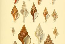 ilustraciones marinas