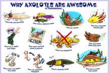 axolotl ♥