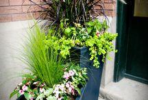 Gardening/Patio Ideas
