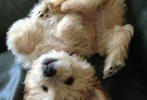It's a dog's world / by Paula Loveless