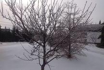 Elliston, NL January 30, 2015.......Frozen / Frozen!