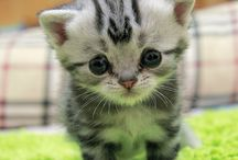 Cute and Funny Pets / Lovely pets!