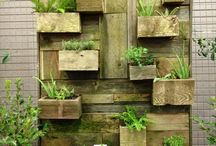 Gardens: Wall/Vertical